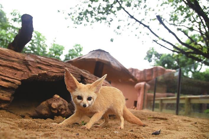 深圳野生动物园新春福利来袭:9999张门票免费送,专属年卡购买仅需5折!